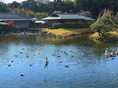 初冬の陽だまりの暖かさ 残り紅葉の白鳥公園♪