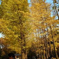 羽根木公園の紅葉 2006/12/02
