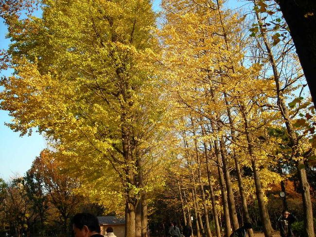 羽根木公園の紅葉 2006/12/02<br /><br />羽根木公園にイチョウの紅葉を見に行きました。<br />ここのイチョウの紅葉はとても綺麗です。<br />ここ数年、毎年見に来ています。<br /><br />所在地:〒155-0033 東京都世田谷区代田4丁目38-52