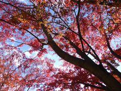 晩秋の優雅な伊豆と富士五湖 愛犬セレブの旅♪ Vol20(第4日目) ☆河口湖:「久保田一竹美術館」 庭園を優雅に歩く♪富士を愛でながらエスプレッソ♪