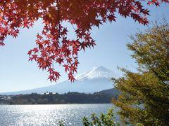 晩秋の優雅な伊豆と富士五湖 愛犬セレブの旅♪ Vol27(第5日目) ☆河口湖:紅葉の河口湖畔から富士山を眺めてお別れ♪