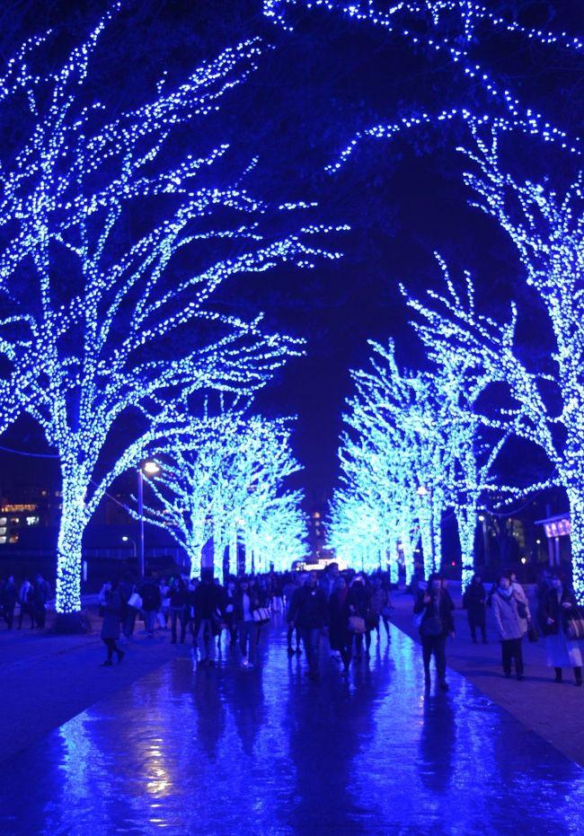 渋谷の代々木公園ケヤキ並木は、今冬から青の洞窟となった。<br />2014年の目黒川の青の洞窟が、あまりの混雑で開催されなくなったのを、渋谷が引き継いだ。<br />55万球の青色LEDライトで照らされた、ケヤキ並木は地面に反射シートが敷かれ、青の洞窟を出現させた。<br /><br />2014年に一度だけ開催された目黒川の「青の洞窟」はこちらです。<br />http://4travel.jp/travelogue/10959987
