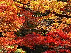 目黒-4 東京都庭園美術館 芝庭/日本庭園 ☆紅葉・黄葉 最盛期で