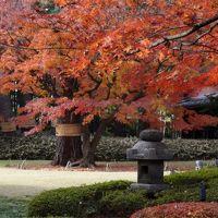 2016荻窪歩き 紅葉とレトロを楽しむお屋敷巡り