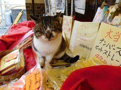 2016年佐賀 宝くじ販売最終日に宝当神社にお参りに行きました。福猫たちが迎えてくれました
