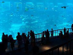 水族館はどこ???セントーサ島内行ったり来たり… ジャカルタ・シンガポール2016の旅7-1