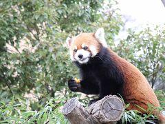冬の兵庫旅No.5 大きな熊猫と小さな熊猫に会いに王子動物園に行こう
