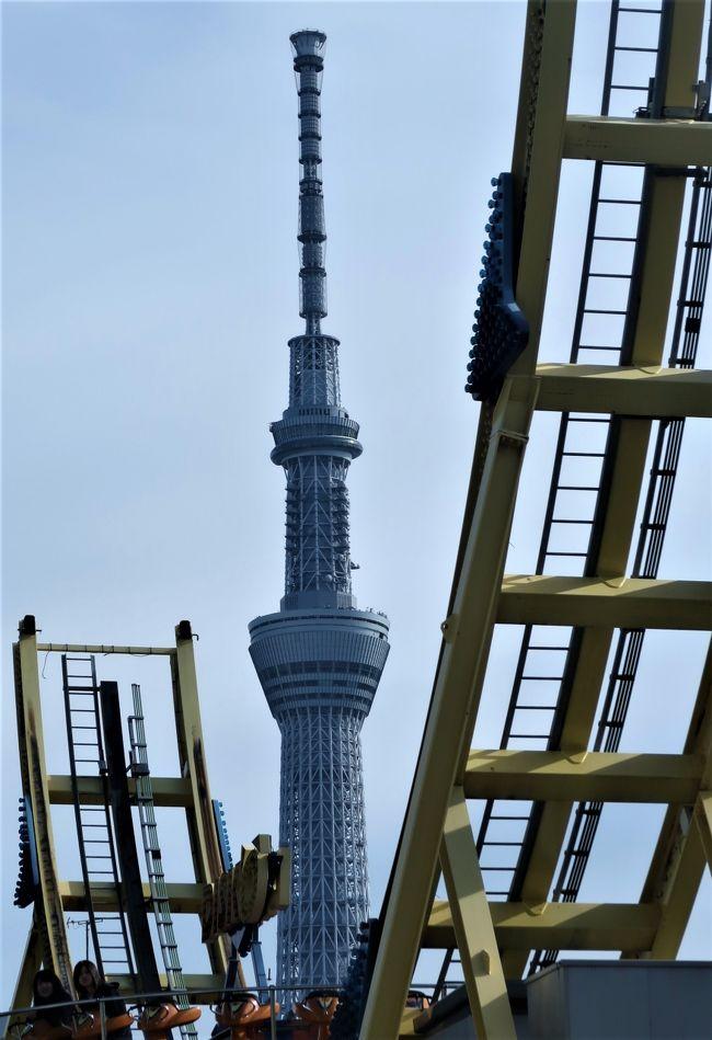 東京スカイツリー(TOKYO SKYTREE)は、東京都墨田区押上一丁目にある電波塔(送信所)である。観光・商業施設やオフィスビルが併設されており、ツリーを含め周辺施設は「東京スカイツリータウン」と呼ばれる。2012年5月に電波塔・観光施設として開業した。<br />(フリー百科事典『ウィキペディア(Wikipedia)』より引用)<br /><br />東京スカイツリー については・・<br />http://www.tokyo-skytree.jp/<br /><br />浅草ビューホテル(Asakusa View Hotel)は、東京都台東区西浅草にある高層ホテルである。同じ場所に本店を置く日本ビューホテル株式会社が運営する。<br /><br />1985年(昭和60年)9月に、国際通り沿いの浅草国際劇場跡地に開業した、地上28階地下3階建てのホテル。 タワー部は国際通りから約20度ずらして、隅田川とほぼ平行になるよう建てられており、南東側の客室からは隅田川の花火が一望できる。客室壁面には小窓が設けてあり、隅田川の花火以外に、三社祭の活気、浅草寺の除夜の鐘の生の音を楽しむことが出来る。特に東京スカイツリーを眺めることのできる27階東側のレストランでは、「世界一の夜景」をPRしている。 伝統とモダンをミックスした下町浅草で、宿泊、ウェディング、レストラン、宴会、法宴などもでき、ショップや温水プールもあるホテルである。<br />(フリー百科事典『ウィキペディア(Wikipedia)』より引用)<br /><br />浅草ビューホテル については・・<br />http://www.viewhotels.co.jp/asakusa/<br /><br />浅草(あさくさ)は、東京都台東区の町名。東京都台東区のおよそ東半分を範囲とし、江戸・東京の下町を構成している地域のひとつである。浅草は下谷・本所・深川と並ぶ、東京下町の外郭をなす。概ね東京旧市内で高台に比べ低地を多く占める旧区分を下町としている。そのため旧浅草区に属する浅草地域は下町にあたる。<br />現在も下町情緒を感じさせる観光の街として賑わっている。<br />(フリー百科事典『ウィキペディア(Wikipedia)』より引用)<br />