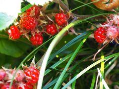 Japan ELLiEさんのHoliday in Japan  2016 赤塚植物園と東京大仏 ~ミツバチばあやの冒険~