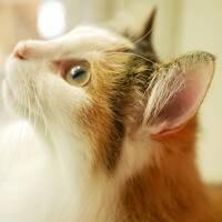 猫と温泉(2泊3日) Vol.1