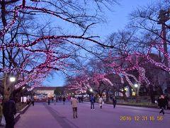 ☆14 大晦日見納めの上野恩賜公園冬桜イルミネーション 2016