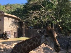 �年末タイ。カオキアオ動物園。