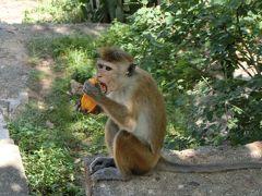 Wonder of Asia - 光り輝くスリランカで年越し! #3 スリランカにもモンキー・テンプルがあった! @ダンブッラ