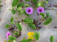 Yossyネズミの Tropical day-dreams in Thailand もう回数数えるのヤンピ!。 3/  (Novotel Huahin Chaam beach resort &spa@Cha-am 2/ )旅果てぬ掴めぬ程の後ろ髪。