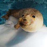<オホーツク・グルメマジック・モニターツアー.3>暴風雪パニック・オホーツクの海鮮最高!吹雪のサロマ湖へ