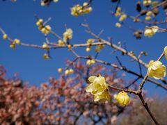 ほんのちょっとだけ、春を探しにお散歩@新宿御苑