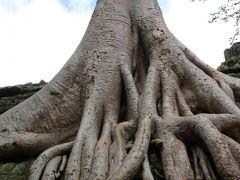 アンコール遺跡へ!!カンボジア・シェムリアップの旅・3日目(アンコールワット、タ・プローム、バンテアイ・スレイ)