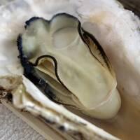 石巻へ牡蠣を食べに行く