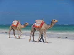 真っ青なビーチ、真っ白な砂浜、美味いシーフード、これがケニア!