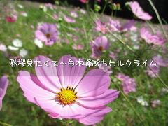 秋桜見たくて~白木峰ぷちヒルクライム