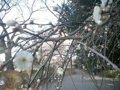 清々しいスタートの2月1日 彼方此方にモウ春の息吹が、 嬉しいねぇ 焼きたてパンの香りも春うらら ^^!  ブログ