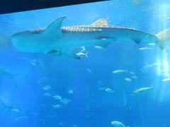 三回目の美ら海水族館 ☆5