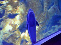 幻想的な「夜の海遊館」とひとりぼっちのコバンザメ(大阪)