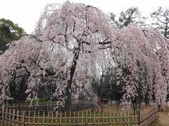 仔猫といっしょ計画(京都総決算2014 京都御苑他)