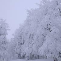 樹氷に会いに ~粉雪舞う蔵王温泉~