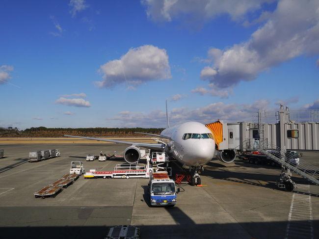 去年から始まったJALのどこかにマイル。<br />6000マイルで4つの候補のどこかに行けるというもの。<br />面白そうー!<br />1月はちょうど切替でパスポートが無くて海外に行けないので<br />ちょうどいいと思いやってみました。<br /><br />・東京よりも寒いところはNG(東京も寒すぎる)<br />・雪が積もっているところ、積もりそうなところもNG(運動神経が悪い)<br />・レンタカー必須もNG(免許持っていない)<br /><br />真冬の1月、この条件だとかなり行き先が限られ<br />つまりは九州か四国のみ。<br /><br />4つの行き先のどれになっても大丈夫なところが<br />出るまで何度もやり続けた結果、熊本に。<br /><br />初めての熊本。<br />美味しいものにたくさん出会えました。