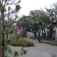 梅を見に行きました。帰りは羽田空港でお食事