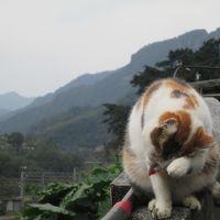 またまた台湾上陸!美味しかった旅 前半