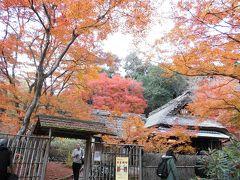 京都紅葉めぐり (4)