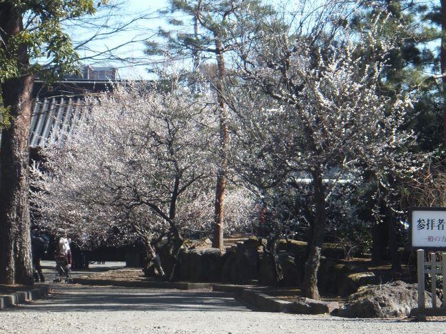 世田谷城阯公園に行った後は豪徳寺と世田谷八幡等に行きました。
