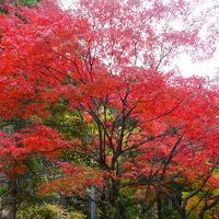 201111四国旅行 二日目【愛媛県(四国カルスト、面河渓)】