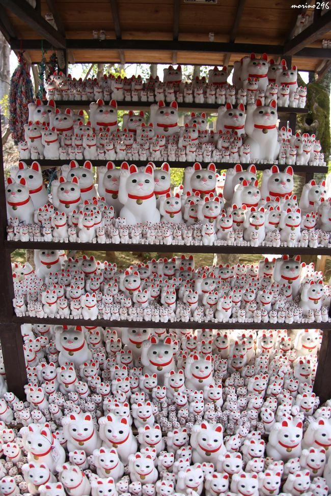 「第40回せたがや梅まつり」が行われている羽根木公園から、招き猫の寺として知られる井伊家の菩提寺・豪徳寺へ行ってきました。<br /><br />ネットで梅の名所を調べてみると、るるぶのサイトで羽根木公園がNo.1とのこと。<br />「えっ!羽根木公園が1番?」とよく見ると、「アクセス数がNo.1」でした。<br /><br />初めての羽根木公園ですが、梅の花はまだ咲き始めたところにもかかわらず、大勢の人が集まっていました。<br />羽根木公園の後は、徒歩圏内にある豪徳寺へ。<br />こちらは、数度目になりますが、招き猫の数が前回よりも倍増していてビックリ!<br />井伊家の菩提寺なので、大河ドラマ「おんな城主 直虎」の効果なのでしょうか。<br />御朱印をもらう人も多く、今年は参拝される方が増えそうですね。<br /><br />梅のお花見のつもりが、歴史散歩となってしまいました。<br />宜しければご覧ください。<br /><br />