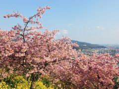 少し早い春を求めて「まつだ桜まつり」へ