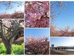 新松田 河津桜とつるし雛を見に散歩♪