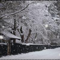 今冬は、雪をたっぷり堪能~~!! ☆角館 武家屋敷通りの雪景色☆