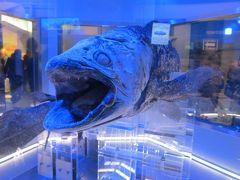 噂の深海水族館に行ってみよう