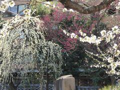 湯島天満宮「梅まつり」 Vol.2 庭園に咲き乱れる梅を優雅に眺めて♪