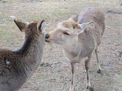 2月の嬉しいプチオフ会☆kuritchiさんとなんばパークスでランチ&お茶☆milkちゃん、ようこそ奈良へ~♪