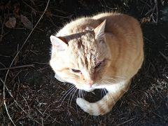 ハンターマウンテン 猫支配人の温泉とスノボーワールド