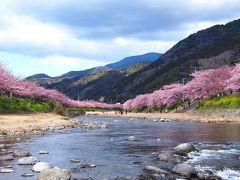 <早春の伊豆・花と海の節約旅・3>見頃の「河津桜」どこまでも続く桜並木&峰温泉の大噴湯