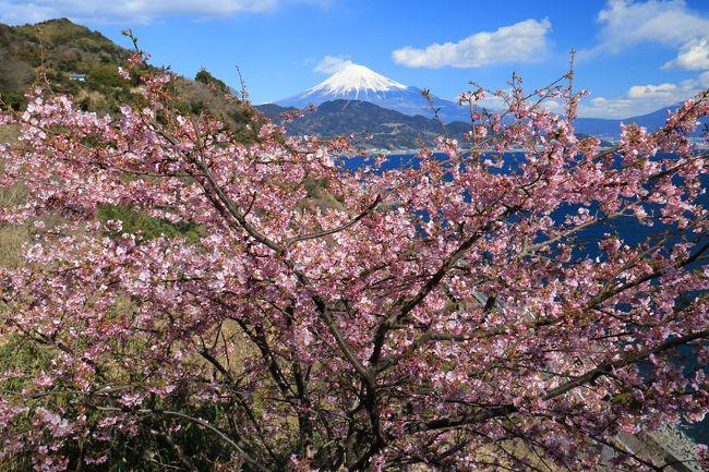 久しぶりに早春の梅、桃、寒緋桜と富士とのコラボになる風景に出会いたく薩埵峠に向かった。<br />由比駅からのウォーキングも兼ねる、心地よい旅だった。