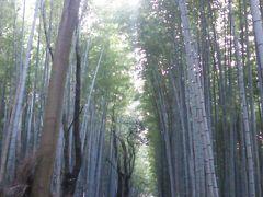 旅行商品「日帰り1day京都スペシャル」で行く京都満喫の旅(パート3)