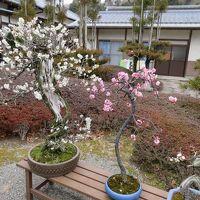 九州復興割のバスツアーで熊本県を巡り、阿蘇の温泉に一泊(追加版)