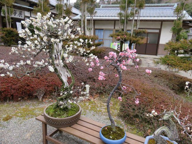 九州復興割と名付けた補助金付きのツアーで熊本県に行ってきた。北九州市の小倉駅前発のバスに乗り、最初は玉名市の蓮華院誕生寺奥の院という処に来た。新しい寺だが、国際的な活動をしている寺のようで、ダライラマが講演に来たり、仏教国との交流をしたりしているようだ。<br /><br />続いて、ツアー参加者全員で熊本駅前から、熊本市役所前まで電車に乗る。水戸岡鋭治氏のデザインによる新型超低床電車「COCORO」という一台だけの電車だそうだ。それから熊本城に向かうが、その旅行記は先に書いた。で、熊本城を出発した後、バスはキムチの里という店に立ち寄り、あれこれ漬物類を試食し、2,3点購入する。さらにバスは阿蘇の外輪山を上がり、大観峰で下車。ここで雨が強く降り、写真はほとんどダメ。バスに再び乗って外輪山を降りる。牧内温泉の一角にある阿蘇ホテル2号館にチェックイン。そこまでが初日の行程。盛りだくさんの一日だった!<br /><br />めぼしい写真を挙げてみようと思ったが、熊本城を抜き出してしまったので、ほとんど残りはインパクトが亡くなった。。。<br /><br />実際、一番、いい時間だった風呂の中と食事中は、写真が一枚もない!!!<br /><br />そこで、最初の訪問地の蓮華院誕生寺奥の院で見た「盆梅展」の写真からスタート。盆栽の梅ということだろう。<br /><br />最初は二日目は別の旅行記のつもりだったが、結局、二日目も押し込めた。急ぎ足だが。。。<br /><br />なお、最後の写真の解説は日本ワインのファンは読まないで下さい!<br />  <br /><br />