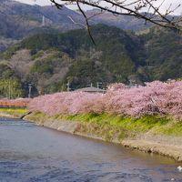 思い立って河津桜観桜の旅