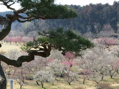 水戸の梅まつり・・日本三大名園のひとつ、偕楽園をめぐります。